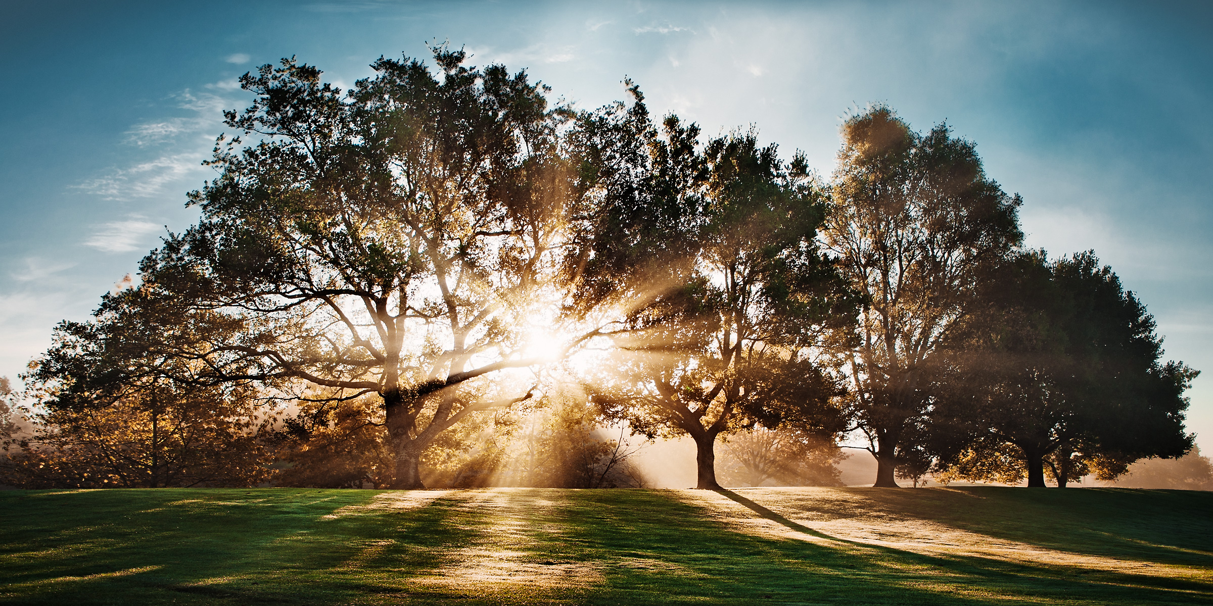 BFSC_sunlight_through_trees_0562-wide