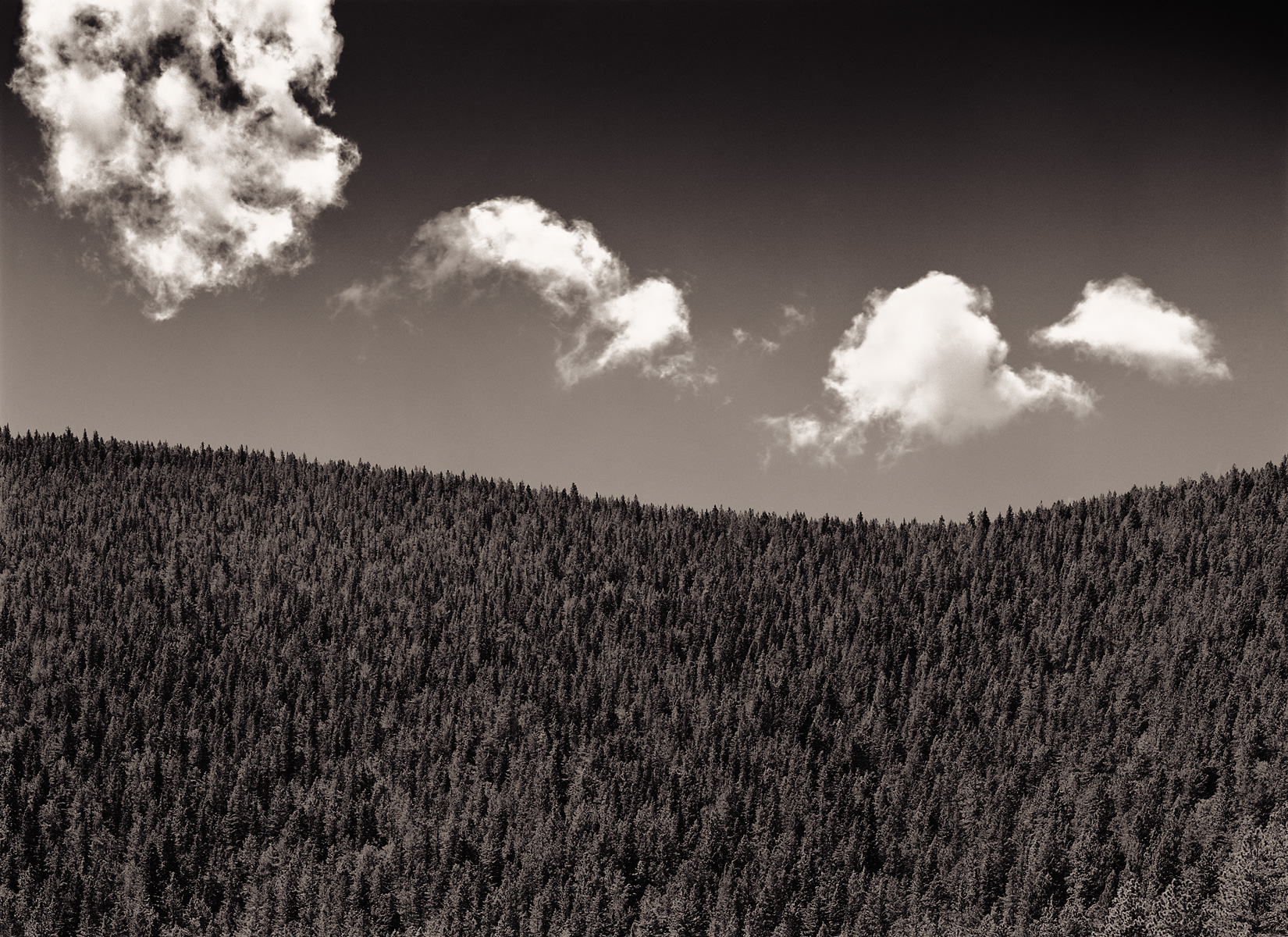 clouds_over_fir_trees