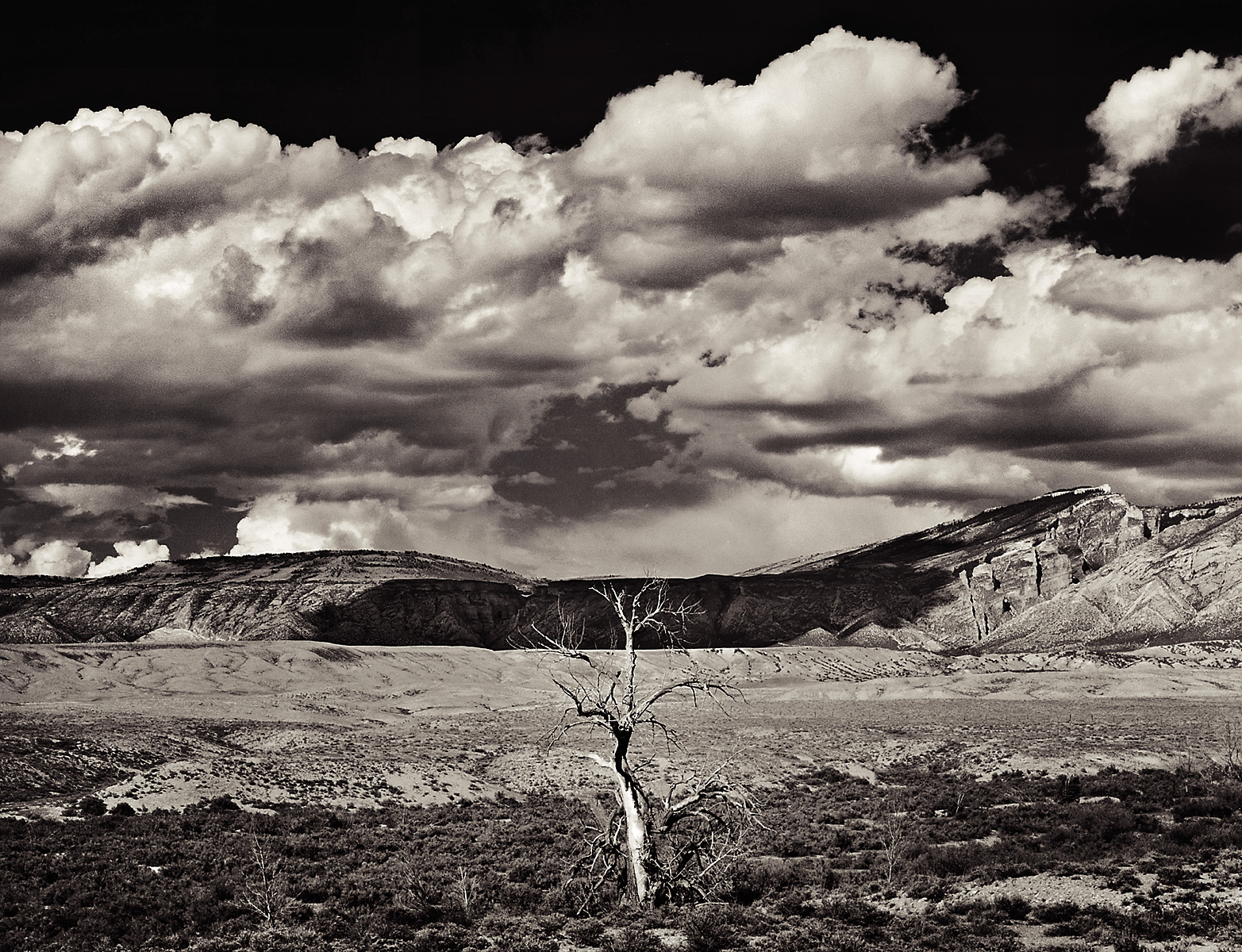 naturescapes-solitary_tree